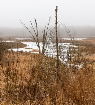 Marshy area covered with ice from the snow in the winter season, details of nature