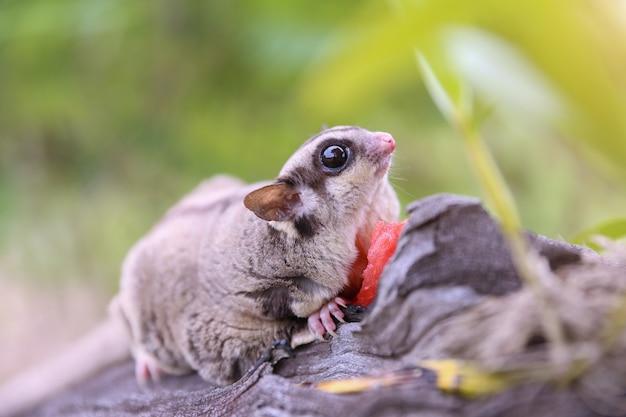 Marsupial on the tree