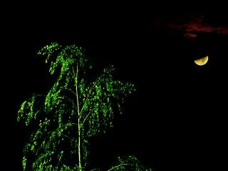 Albero illuminato dal chiaro di luna marziana