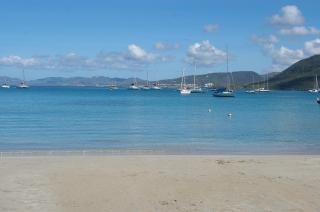 Мартиника остров, palmier