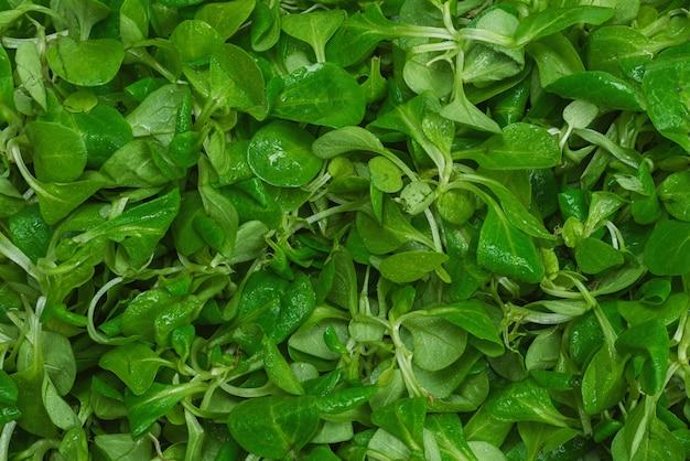 Mash салат крупным планом вид сверху