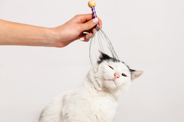 Massaging the cat's head and nape