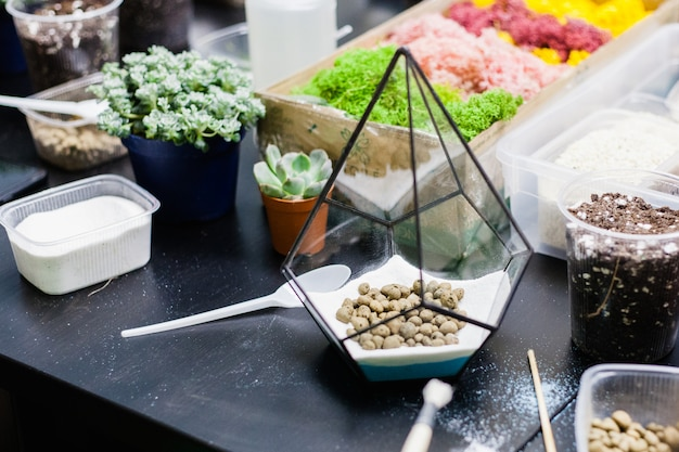 A master class in planting cacti and sukkulentov in the form of glass