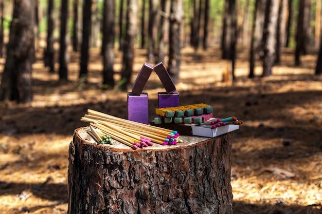 성냥은 숲 나무의 그루터기에 있고 성냥은 삼림 벌채와 일치합니다.