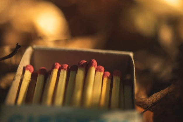 Matches box in the forest, dry leaves photo