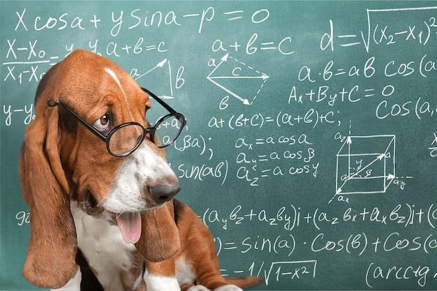 수학 개 미친 안경 학술 동물 칠판