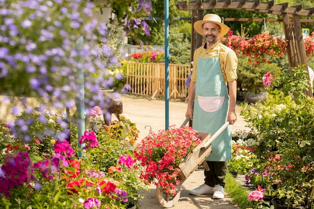 Mature bearded male gardener with cart standing between flowerbeds while taking care of new sorts of flowers