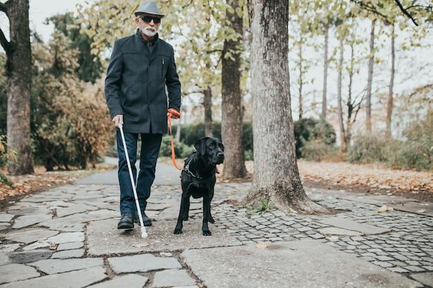 그의 안내견과 함께 공원에서 걷고 있는 긴 흰색 지팡이를 가진 성숙한 시각 장애인.