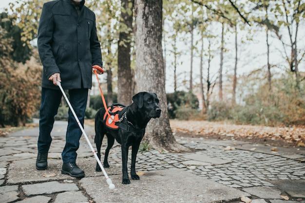 盲導犬と一緒に公園を歩いている長い白い杖を持つ成熟した視覚障害者。
