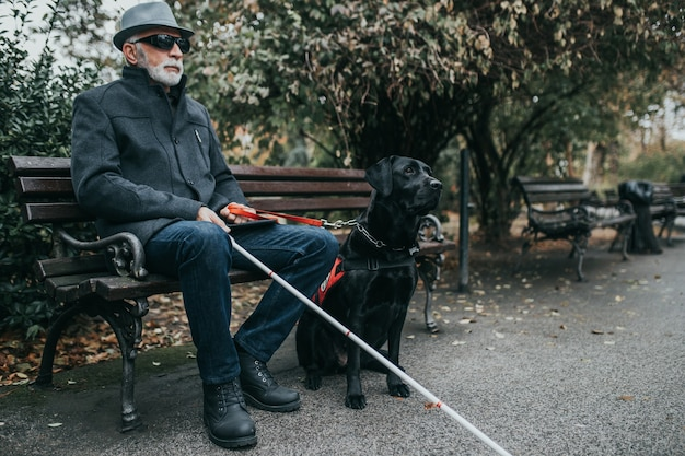 Mature blind man with a long white cane sitting in park with his guide dog.