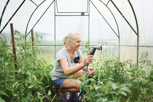 Mature elderly woman watering plants with water hose. farming, gardening, agriculture, old age and people concept