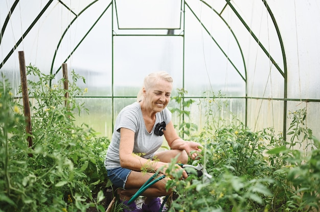 Mature elderly woman watering plants with water hose.