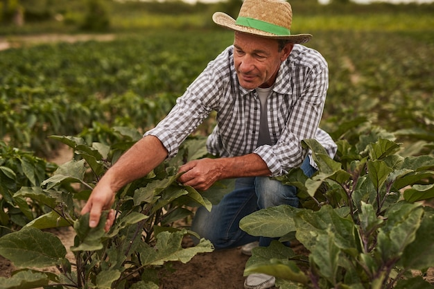 Mature farmer in field with beetroot