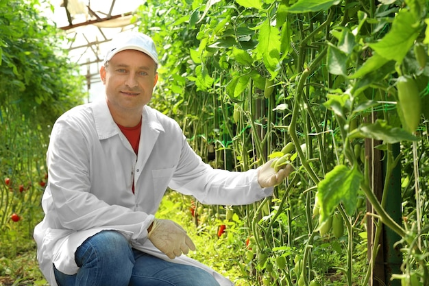 温室の成熟した農夫