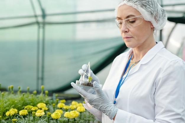 새로운 종류의 꽃으로 실험하는 성숙한 여성 전문가