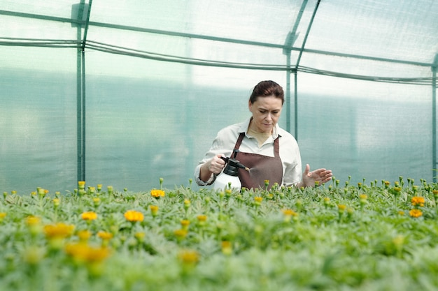 Mature female farmer spraying flowers growing in hothouse