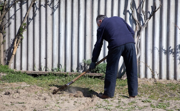 Mature gardener is digging soil with a shovel