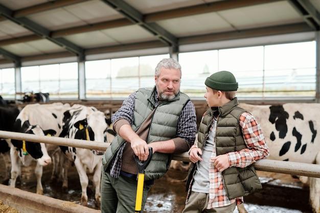 Зрелый седой хозяин животноводческой фермы разговаривает с мальчиком-подростком у большого загона со стадом дойных коров, готовя свежий корм для скота