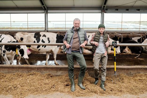 Зрелый мужчина и мальчик-подросток в спецодежде стоят у большого загона со стадом дойных коров на ферме и готовят свежий корм для скота