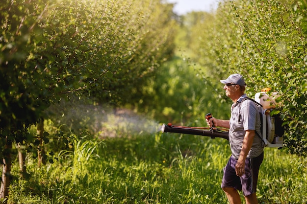 Mature peasant in working clothes, hat and with modern pesticide spray machine on backs spraying bugs in orchard.