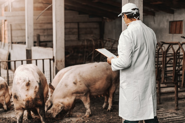 Mature veterinarian in white coat holding clipboard and checking health of pigs while standing in cote. country exterior.