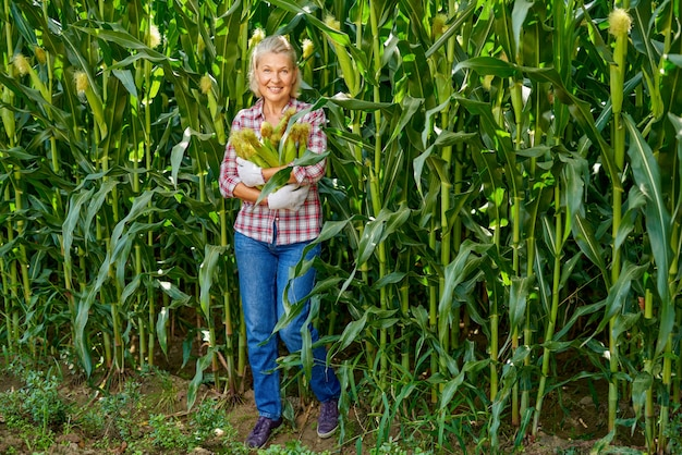 Mature woman farmer at corn harvest.