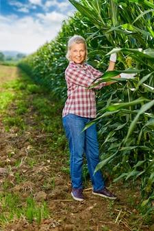 Mature woman farmer harvesting crop corn in field