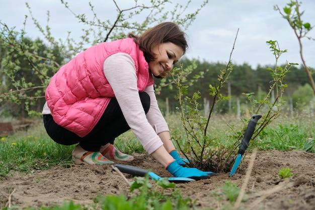 Зрелая женщина в перчатках обрабатывает почву под кустом роз с садовыми инструментами