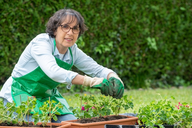 Mature woman potting geranium flowers