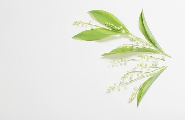 Цветы майской лилии на белом фоне