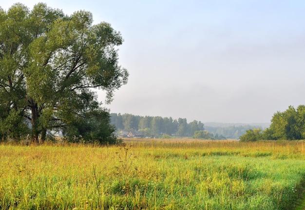 Луг среди деревьев утром