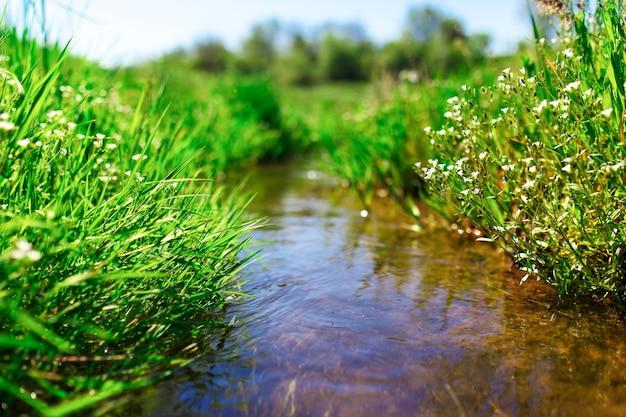 Луговой ручей с зеленой травой, лето, фото крупным планом