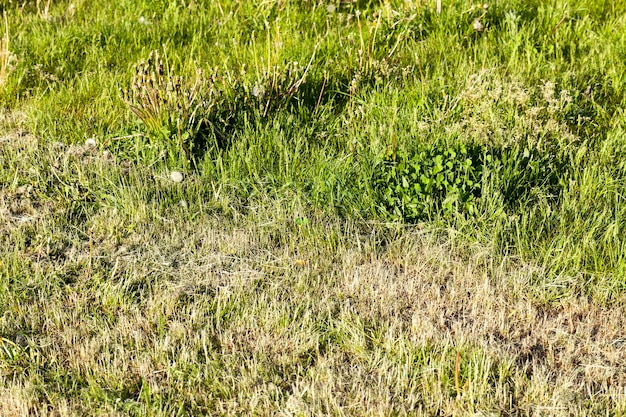 Поле луга, на котором косили траву для ее просушки для получения соломы, приготовление корма для животных, крупный план