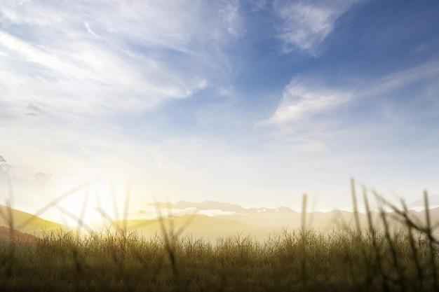 青い空を背景に牧草地