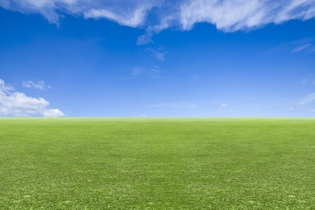 Meadow field with a blue sky background