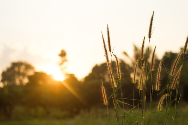 태양 광선, 꽃 배경으로 초원 꽃입니다.