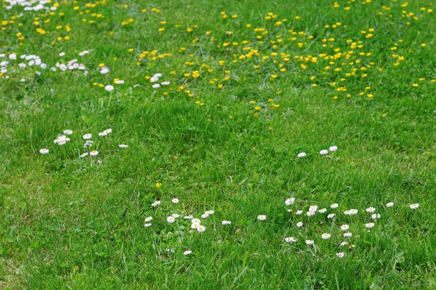 Meadow flowers. green grass and flowers
