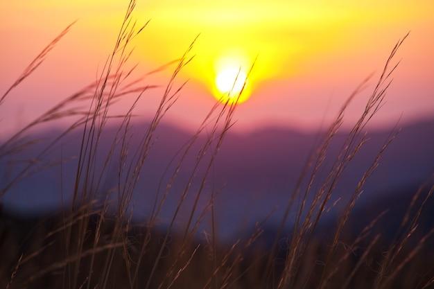 日没の牧草地