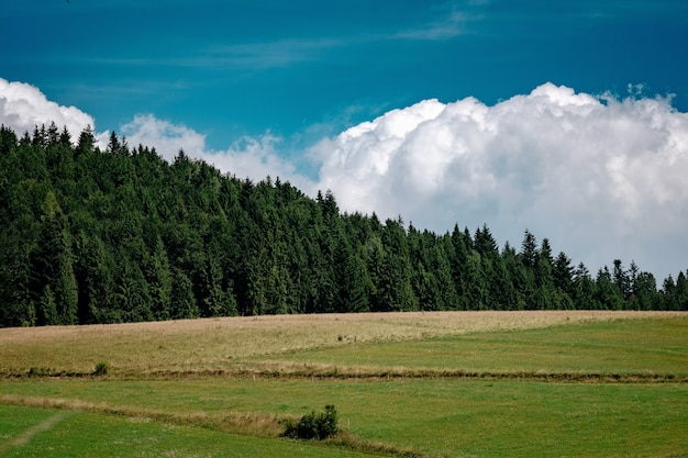 Meadow scenery landscape with blue sky and tall trees background