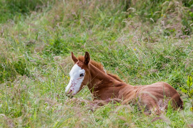 On the meadow there is a nice filly and stands beside her mother horse