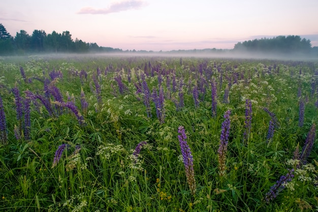 A meadow of wild purple flowers background