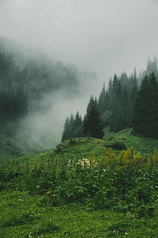 Meadow with flowers on background of mystical spruce mountain forest on the hillside covered with thick morning fog