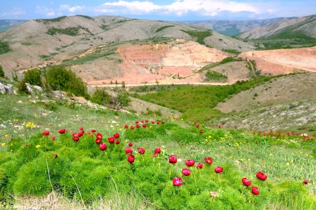 푸른 잔디와 붉은 양 귀 비 꽃과 초원