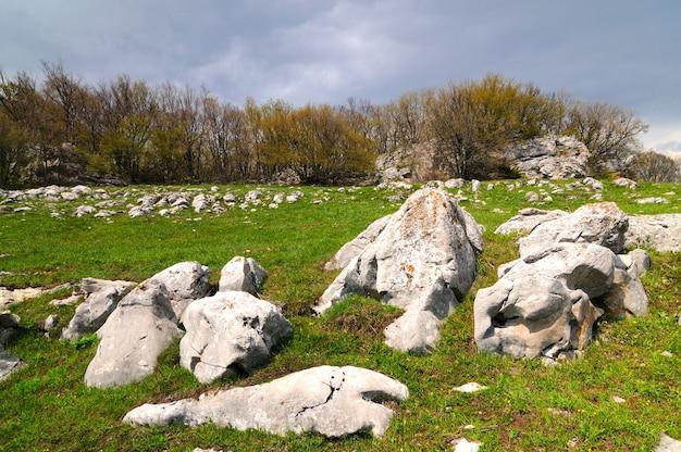 緑の草が散らばった大きな石のある牧草地