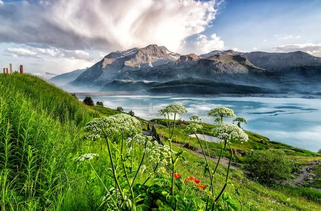 Луг с большим количеством цветов с горами