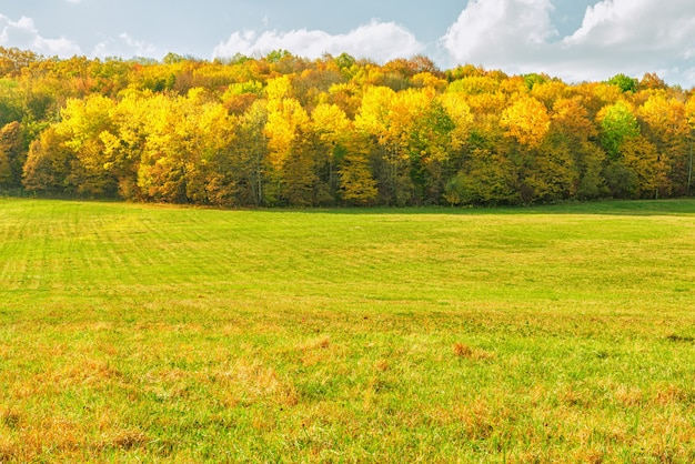 A meadow with mown grass on the edge of the forest