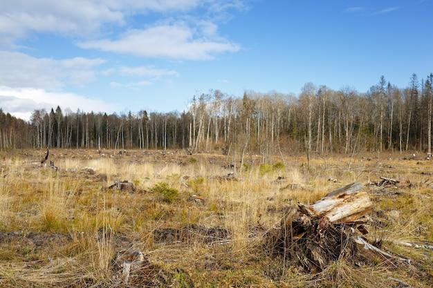 Луг с пнями после вырубки леса. Premium Фотографии