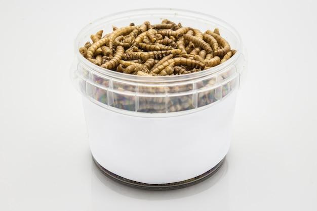 Mealworms  crustaceans tenebrio molitor isolated