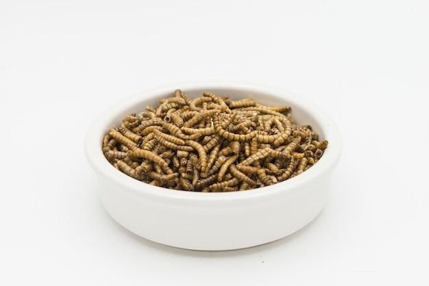 Mealworms ракообразных тенебрио молитор изолированные