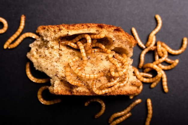 Meat worms on old bread, eating it and moving